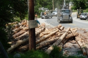 A self-loading logging truck arrives to pluck the logs from the ditch. — photos courtey Simon Lasenby