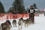 Dog sled -- file photo