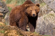 Grizzly bears are but one of many species which will benefit from CBT's Environment Grants Program.