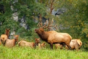 Changes coming to elk hunting in East Kootenay