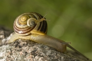 Snails -- photo by Ralf Kunze
