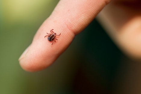 More time in the outdoors leads to the chance of more ticks and bites.