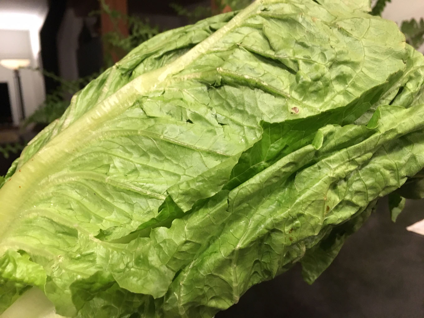 Can You Wash E. Coli Off Your Romaine Lettuce?